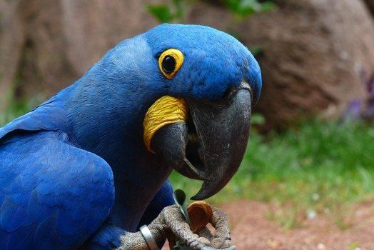 woliera dla papug